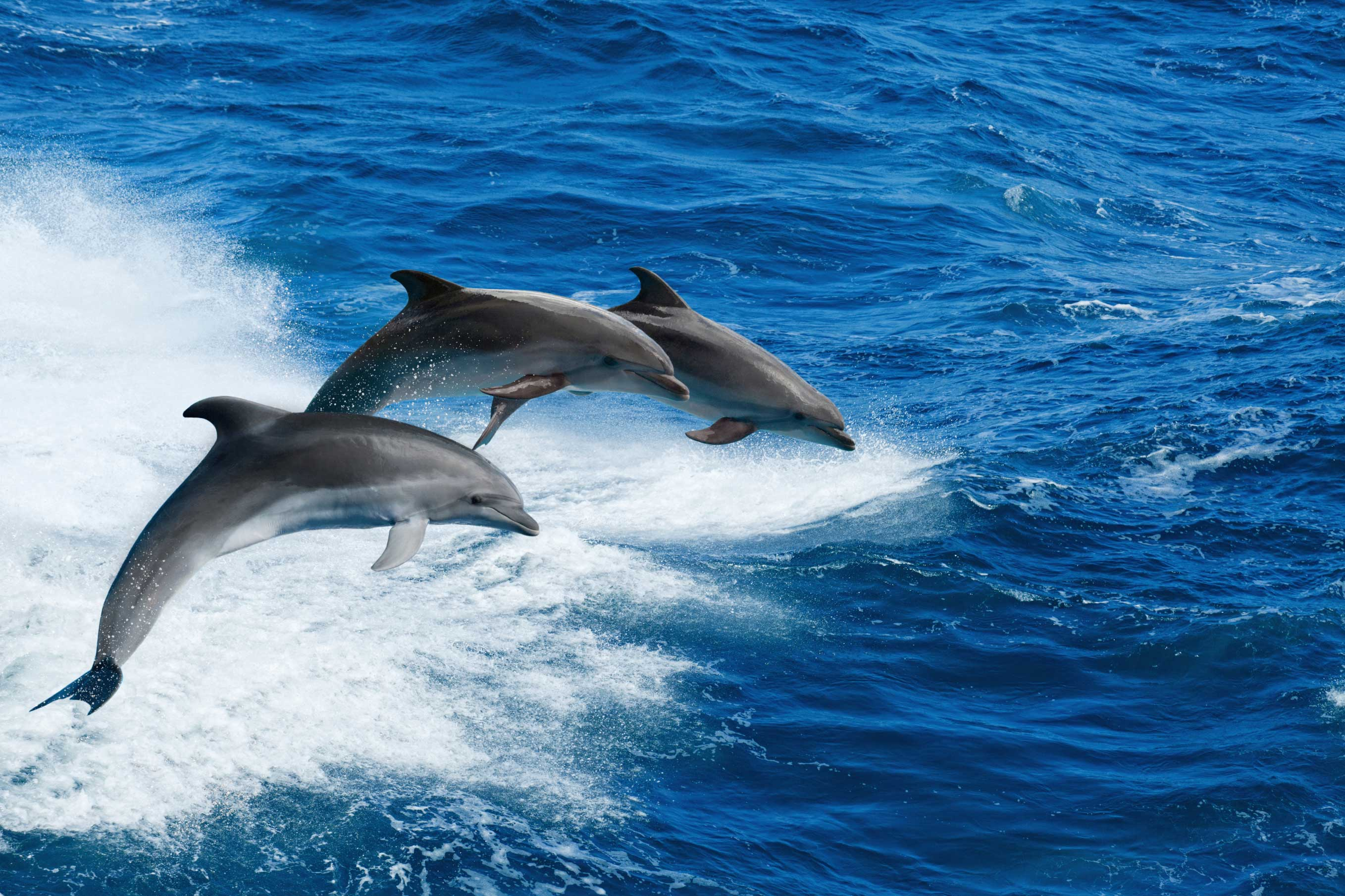 dophin_tours_clearwater